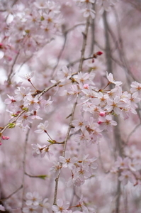 spring0011.JPG